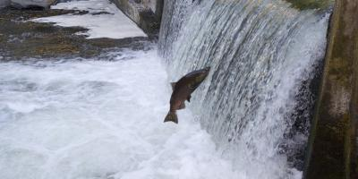 Energy_Hydro_Fish Passage