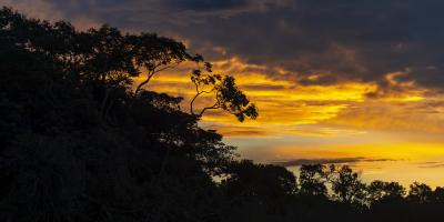 Tropical forest silhouette against sunset sky