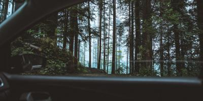 view on dark forest from the inside of a car
