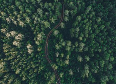 road in a green forest from above