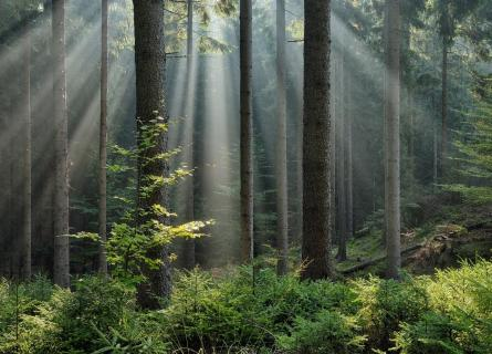 Green forest with a ray of light