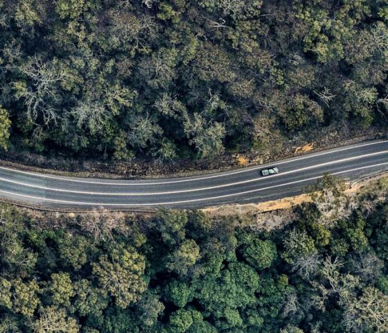 Bird's-eye view of winding road through forest